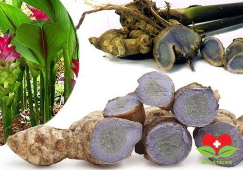 Điểm mặt những cây thuốc quý có tác dụng chữa bệnh dạ dày ít ai ngờ