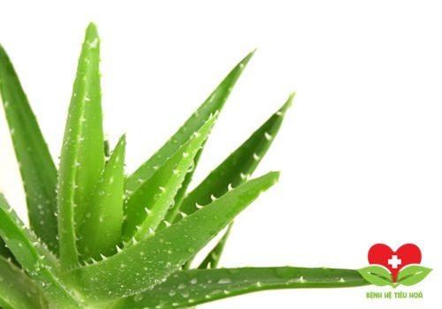 Bài thuốc dân gian chữa mụn nhọt bằng cây lô hội
